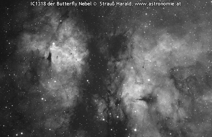 IC-IC1318 der Butterfly © image-owner(s)